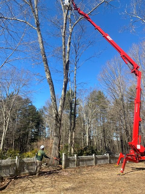 Tree Removal New Fairfield CT