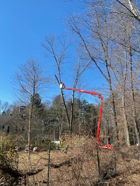 Tree Removal Newtown CT
