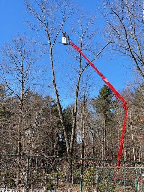 Tree Removal Bethel CT