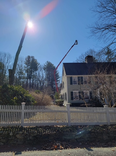 Tree Removal Danbury CT